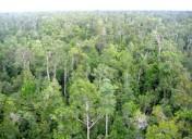 hutan11