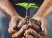 plant_hand
